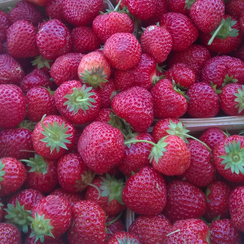Rosedale Strawberries